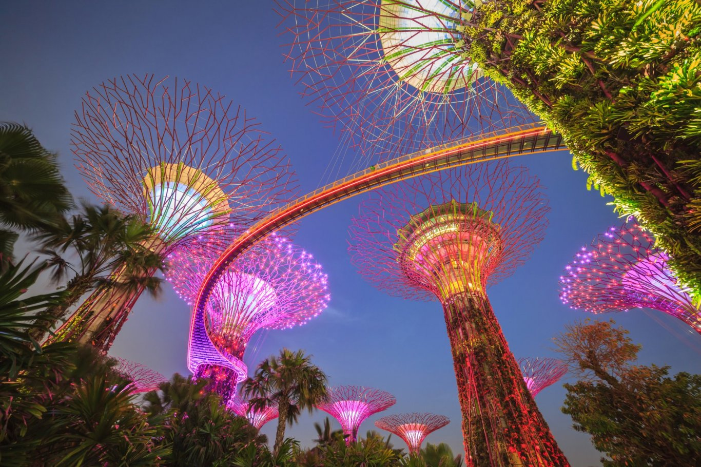 View looking up to the colour lights of the Gardens by the bay in Singapore