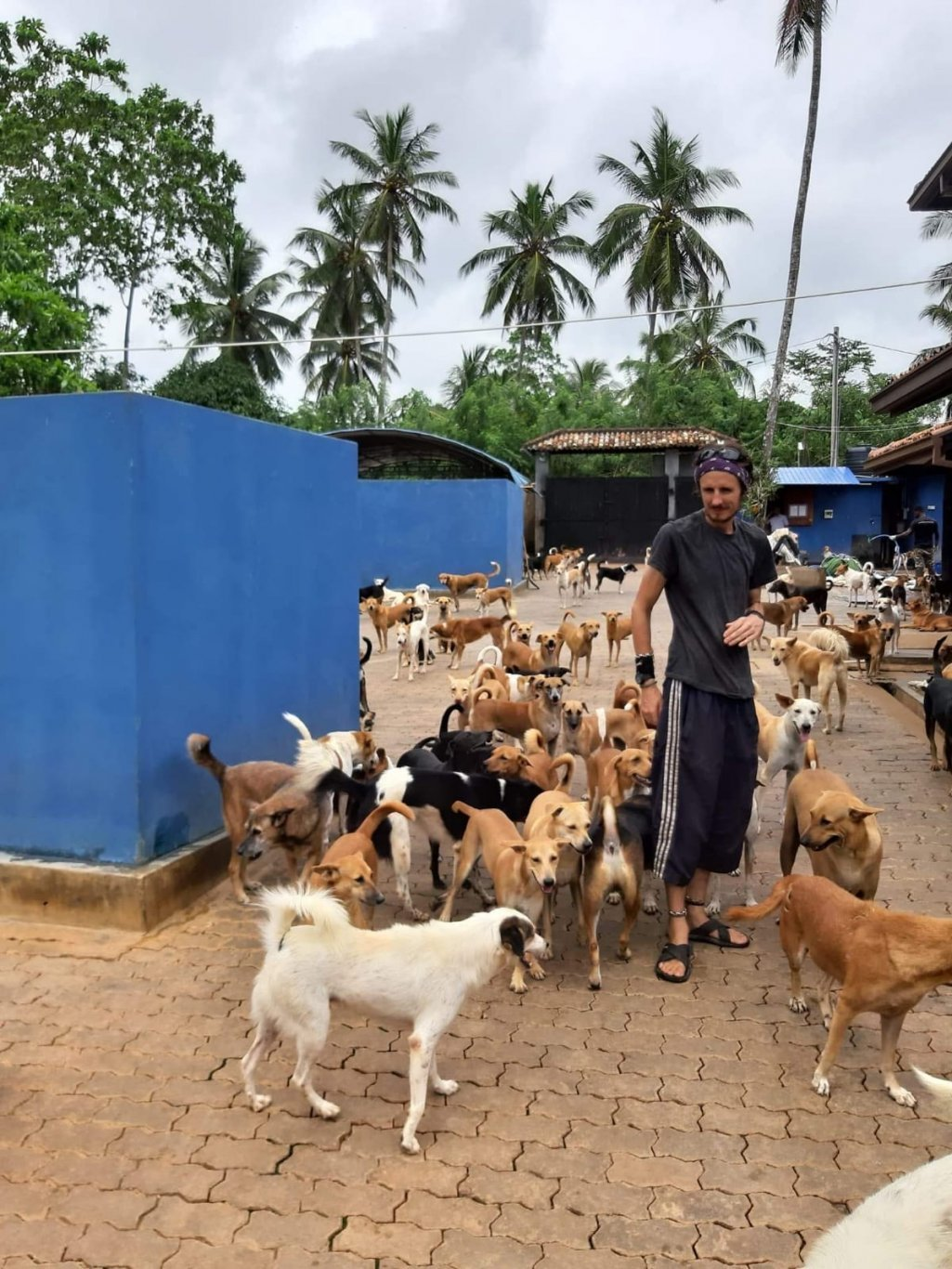 SOs charity in Sri Lanka, man with all the puppys in the centre