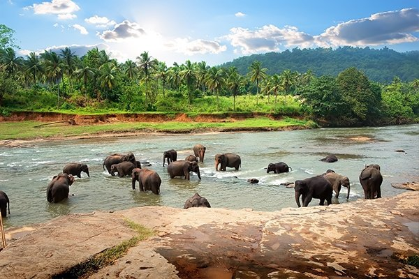 Elephants in National Park - Sri Lanka