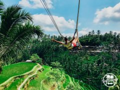 Girl on Bali swing in rice terraces and blue sky