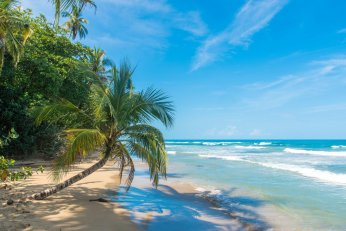 White sandy beach, blue sea and green palm trees