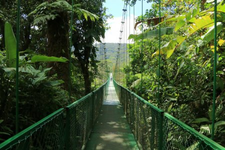 Bridge across canopy of the cloud forest - Costa Rica