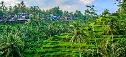 Ubud rice terraces, bright green hills and jungles