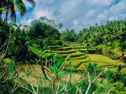 view of green rices terraces and blue sky in ubud Bali