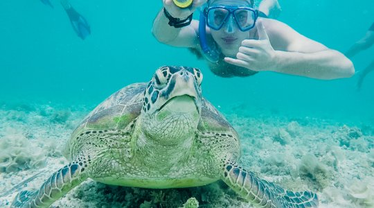 turtle sat at the bottom of the sea with man snorkelling behind