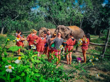 A group feeding the elephants at the sanctuary in Chiang Mai Thailand