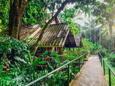 green jungles with wooden huts and path going through