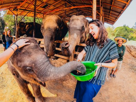 A girl feeding a baby elephant at an elephant sanctuary in Thailand
