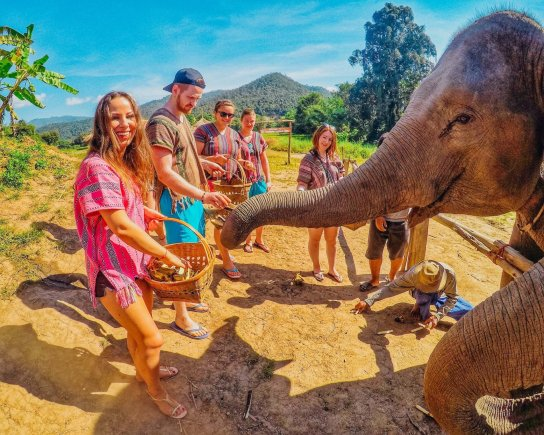 Feeding bananas to the elephants at the sanctuary in Chiang Mai Thailand
