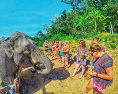 A group feeding the elephants bananas at the elephant sanctuary in Chiang Mai Thailand
