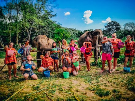 Meeting the elephants with buckets of bananas ready to feed them in Chiang Mai Thailand